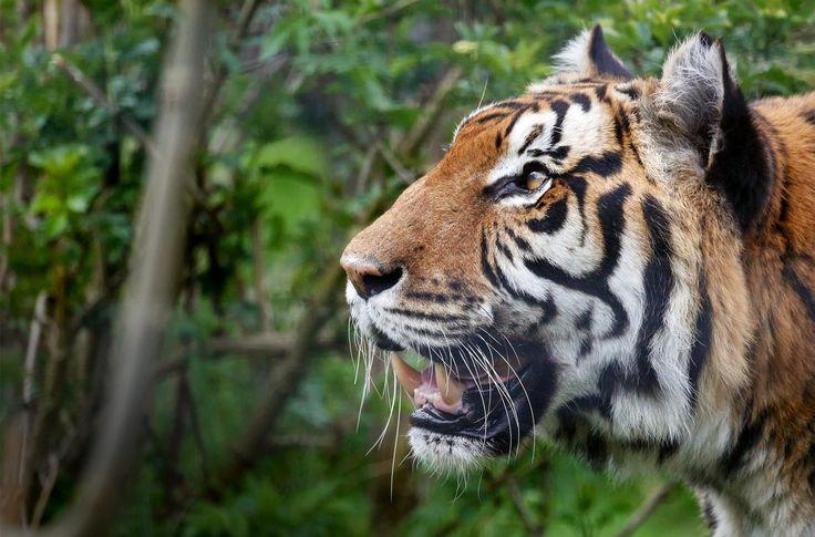 Shepreth Wildlife Park