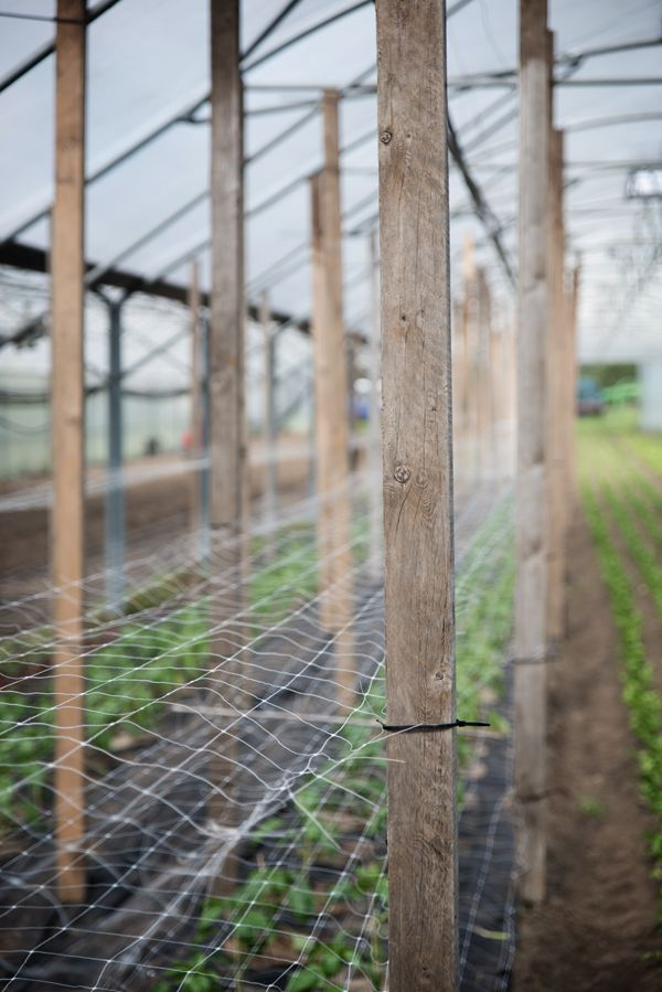 I love eco blog/De Wassende Maan/biodynamische boerderij