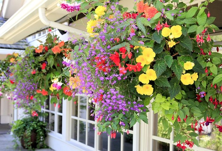 Hanging Flower Basket Supplies : Best ideas about hanging wall baskets on
