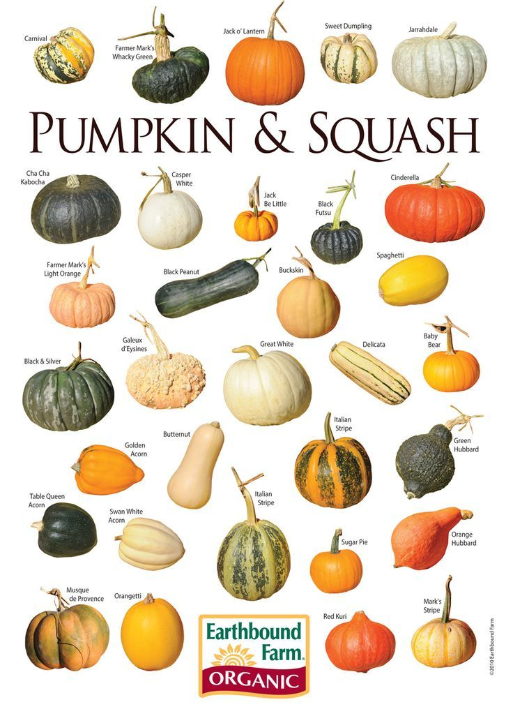 Types of pumpkin (Googled)