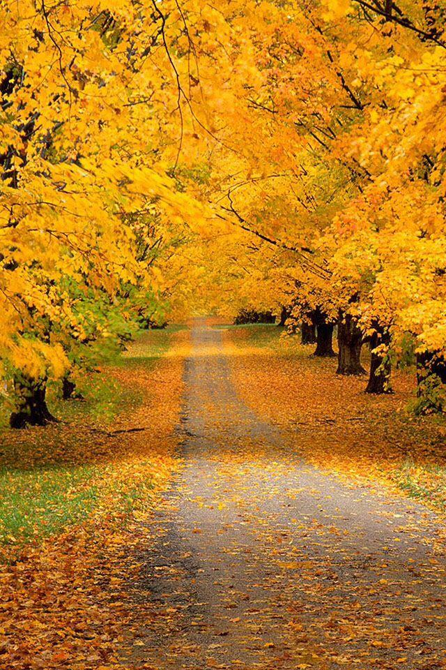 Fall scene | Autumn Natures Art | Pinterest