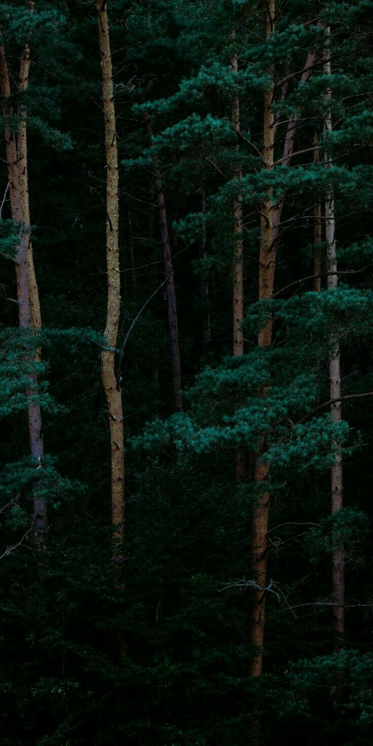 You Little Dark One Forest Wallpaper Tree Wallpaper Iphone Nature Photography
