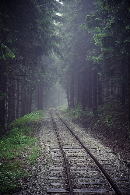 forest train track. ~    For some reason I expect a Calvary of Civil War soldiers to come around the corner.