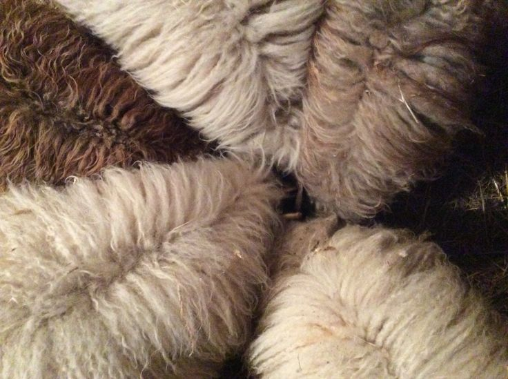 Sheep piling into feed bin....sheep wheel? Lol