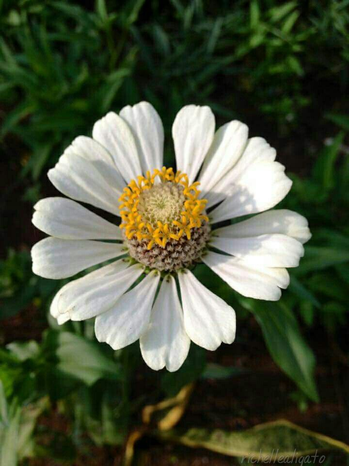 white flower for you ^^