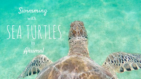 A handy guide on how to snorkel with sea turtles in Akumal, Mexico TOTALLY doing this is Mexico next month🐢😁😁😁😁