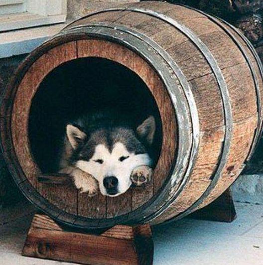 #Barril de Vino usado para casa de perro #FacilisimoconWoox