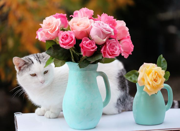 https://flic.kr/p/qfQWZ9 | cat & roses