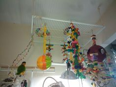 diy parrot perches and play stands - Google Search