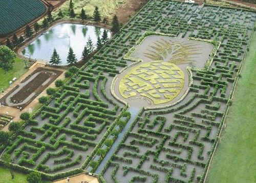 Dole Plantation in Oahu, Hawaii. It is officially the largest maze in the world.  I think we will definitely be doing this!!!!Oahu Hawaii, Oahuhawaii, Dole Pineapple, Dole Plantations, World Records, Ice Cream, Pineapple Gardens, Places, Gardens Maze