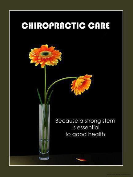 a strong stem is essential to good health   chiropractic