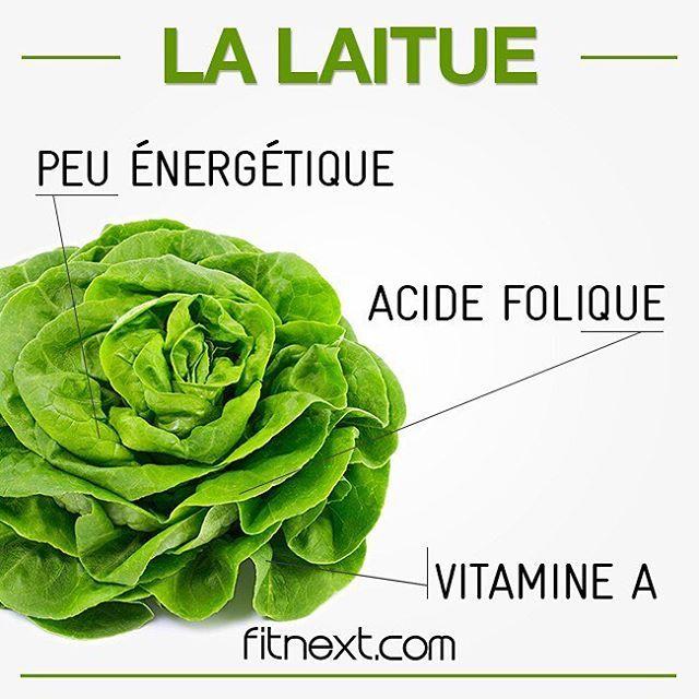 La Laitue, pleine de Vertus. Peu énergétique car composée à 95% d'eau, elle vous apporte des vitamines A et B ainsi que des minéraux. Bonus pour sa grande richesse en acide folique, indispensable à l'activité cellulaire