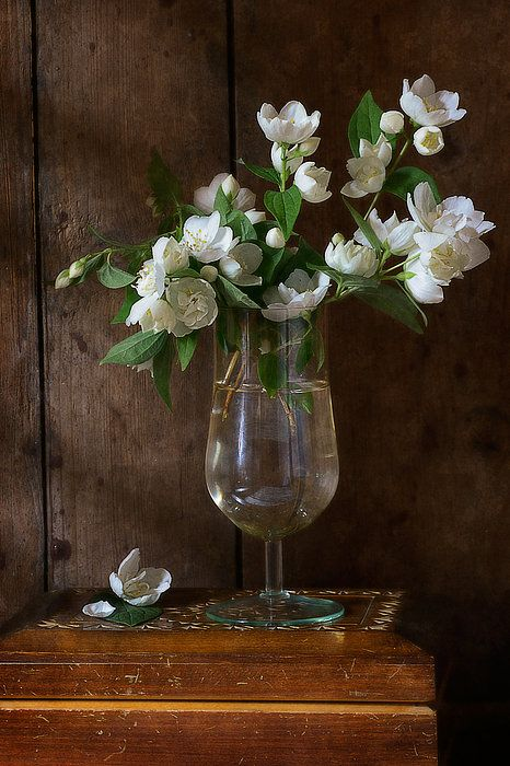 http://nikolay-panov.artistwebsites.com/products/jasmine-nikolay-panov-art-print.html floral still life with simple bouquet of white jasmine in a glass of water with wooden background lighted by daylight in countryside in summer