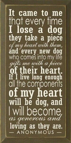 And this is why Noel Fitzpatrick (SuperVet) is such an excellent vet :-)