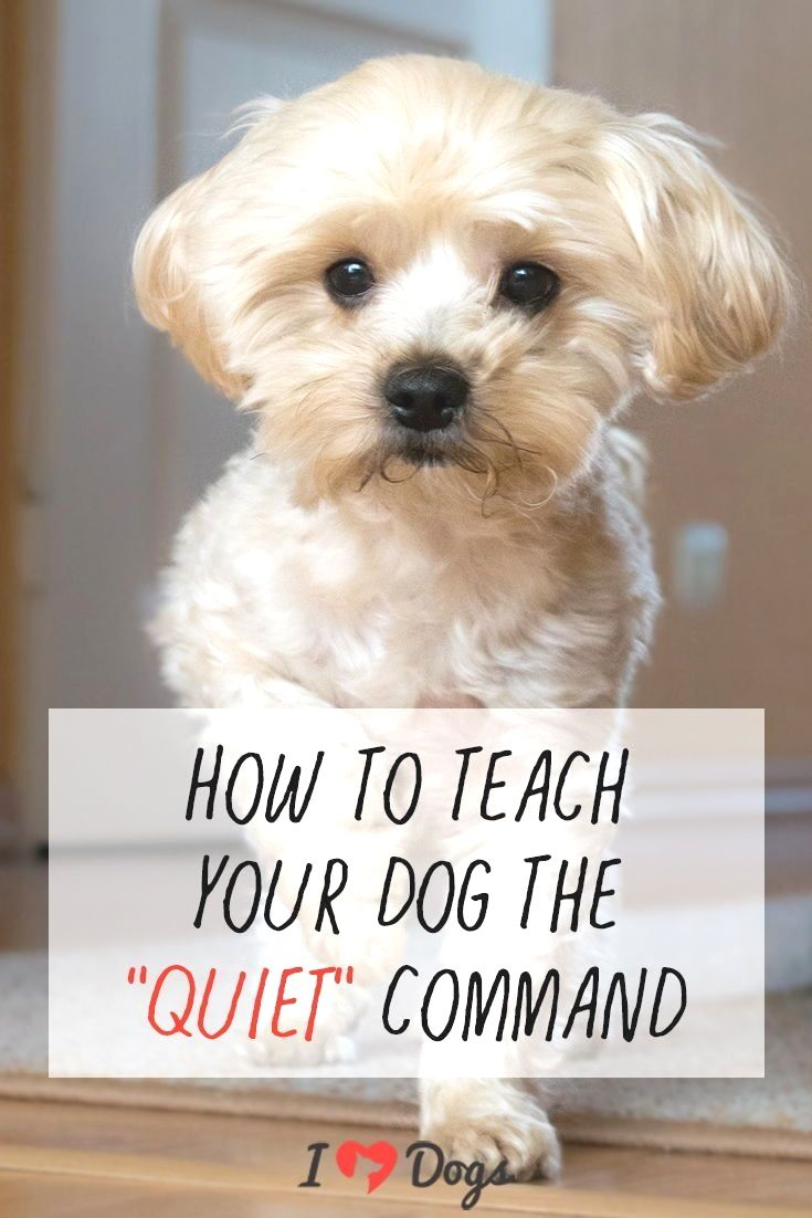 Dog Training You Should Involve The Full Members Of The Family To