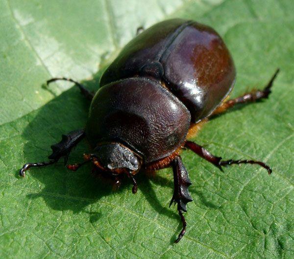 Los insectos que comen raíces de árboles, amenazan los sumideros ...