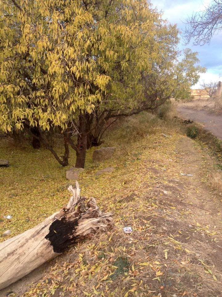إليك أجمل و أروع 18 صورة لفصل الخريف في الجزائر في بلادي Country Roads Tourism Algeria