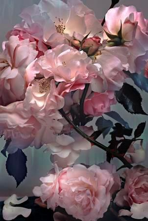 Nick Knight Roses >> gorgeous!