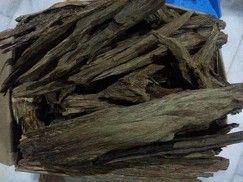 Oud o Agarwood , ingrediente presente nel profumo Nero Afgano