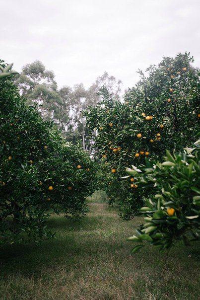Истина не лежит на поверхности. Если на этой почве, а не на какой-либо другой апельсиновые деревья пускают крепкие корни и приносят щедрые плоды, значит, для апельсиновых деревьев эта почва и есть истина. Если именно эта религия, эта культура, эта мера ве