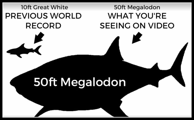 awesome 50-Foot Megalodon Captured on Video