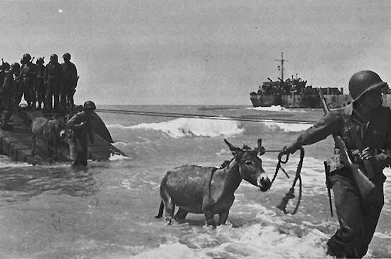 donkey invasion of sicily, old war photos-Invasion of Sicily in 1943 was major WWII campaign - actual military unit was known as the Donkey Corps, using donkeys as transportation through the poor street & rugged conditions