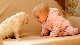Videos de risa de bebes - Se ríen de los perros - YouTube