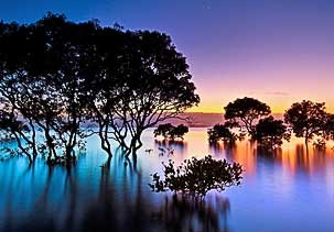 beautiful: Favorit Place,  Lakeshor, Color, Beauty Spaces, Mangrov Trees, Beauty Sunsets, Sunri Sunsets, Android Phones, Trees Hug