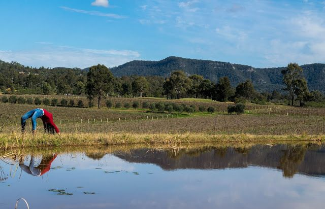 Postcards from Hunter Valley, Australia