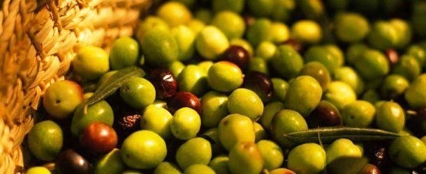 Questo pomeriggio a #Catania si terrà un incontro per capire in quali #scenari dovranno operare le future #Organizzazioni di prodotto nel campo dell'#olio e delle #olive da tavola. #agroalimentare #olivicoltura #Sicilia