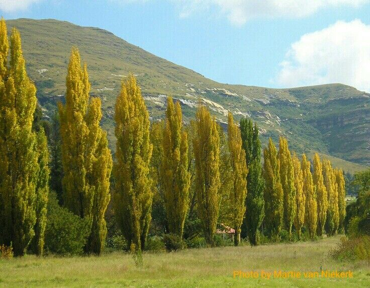 Autumn in Clarens, Eastern Free State, South Africa. Photograph by Martie van Niekerk