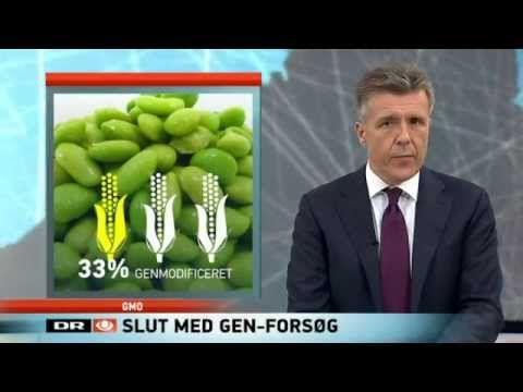 DR-nyheder om stop af GMO-afgrøder i DK