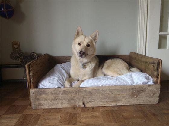 Letto per cani da pallet/legno riciclato... meglio incastrare vecchia branda di Rebel e applicare ruote (tipo industriale ♡ )