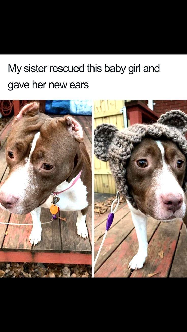 Bahahahaha Dog Memes So Funny Dog Meme Couch Exploded Puppies Funny Dog Memes Pugs Funny