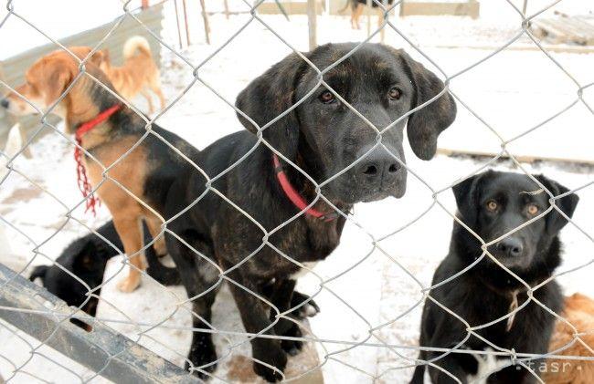 Vlani odsúdili 6 ľudí za týranie zvierat. Do väzenia však nešiel nikto - Slovensko - TERAZ.sk