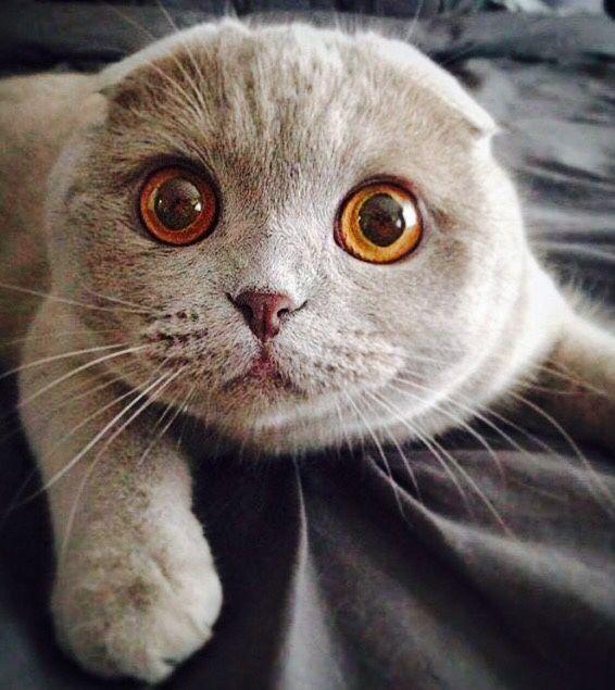 Майнкрафт приколами, смешные картинки с вислоухими котами