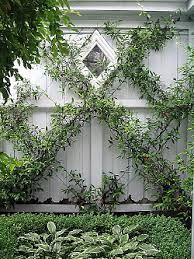 new zealand native hedging plants - Google Search