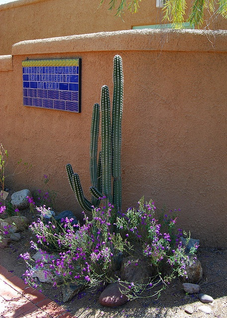90 best images about tucson on pinterest stone cactus