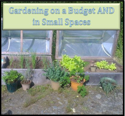 Gardening on a Budget AND in Small Spaces #BudgetGardening, #LowIncome, #SmallSpaceGardening #Gardening