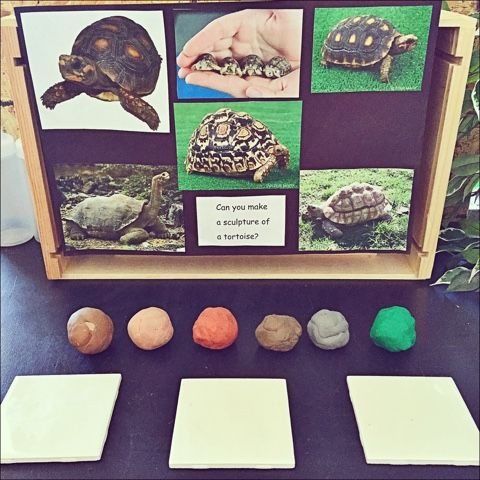 Inquiring Minds: Mrs. Myers' Kindergarten: Tortoises, Feathers, Sound and Farewells: Our Last Days
