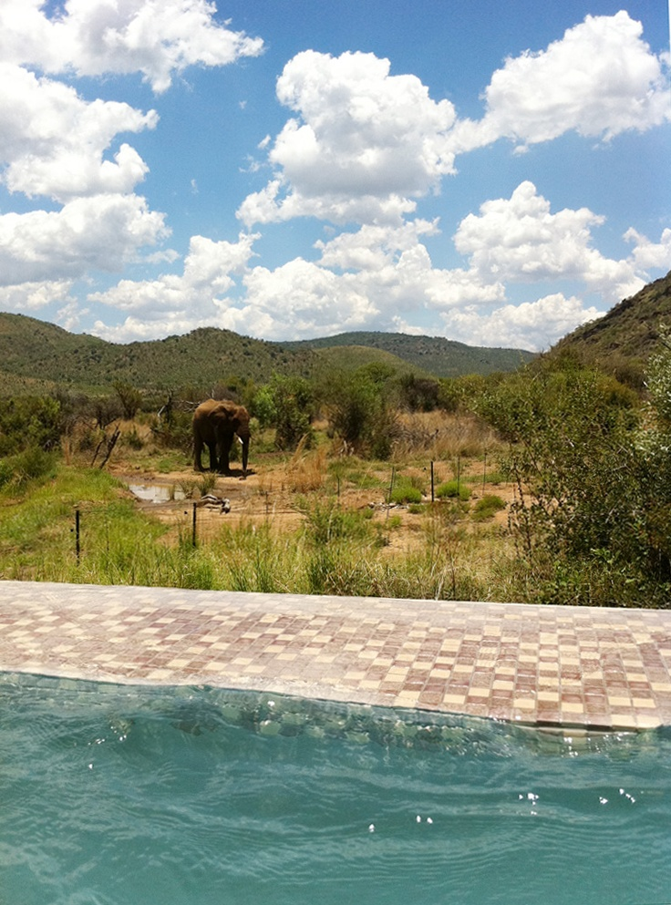 A view at Shepherd's Tree, Pilanesburg - home to one of Amani's Safari spas