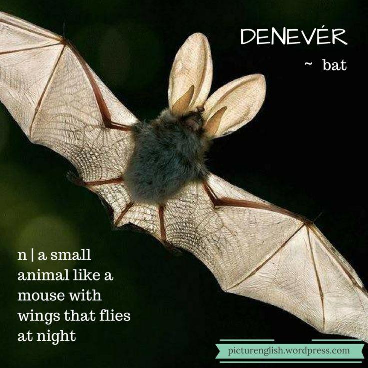 Bat / Denevér