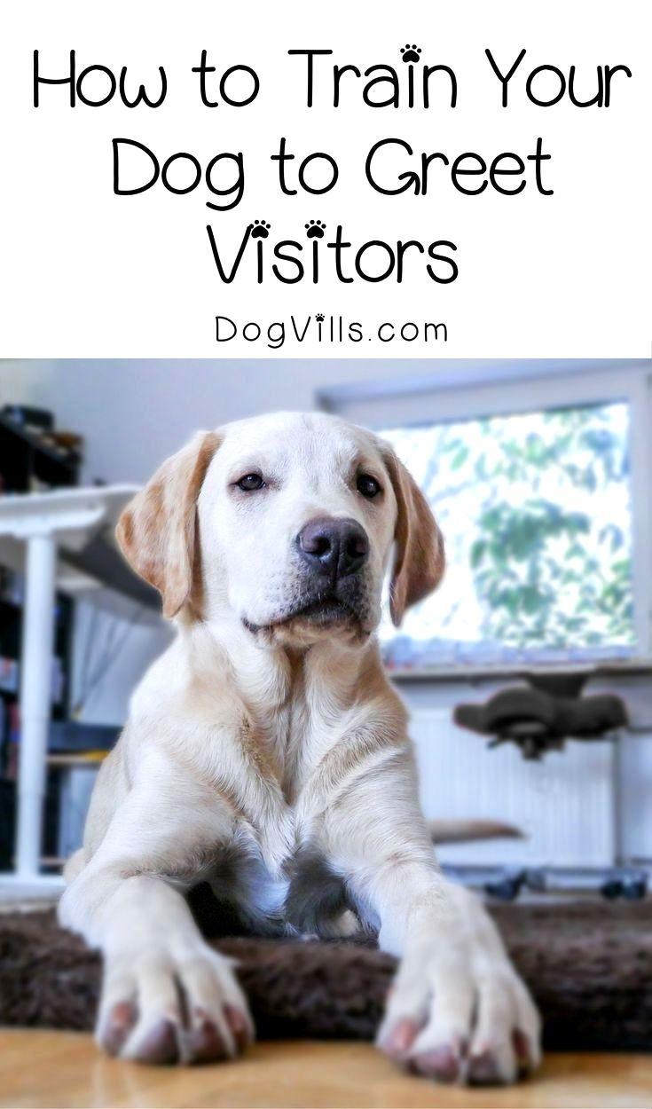 Paw Law Dog Training Daycare Dog Training Yourself Dog