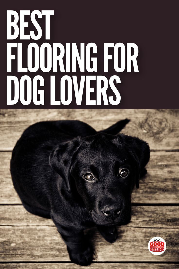 Best Flooring For Dogs How To Keep A Pet Friendly House Nice