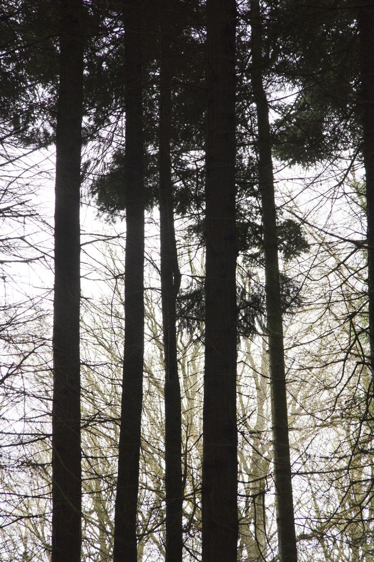 Photo by Tine Bernsen Graphics in the forrest, Nordic, Mindfullness, Black and White, Abstract, Pine.