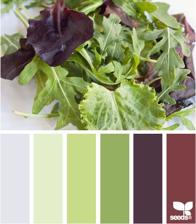 I am thinking these colors in my living room....#colorpalette Pair eggplant with shades of green for another new fresh palette titled salad hues from Design Seeds.