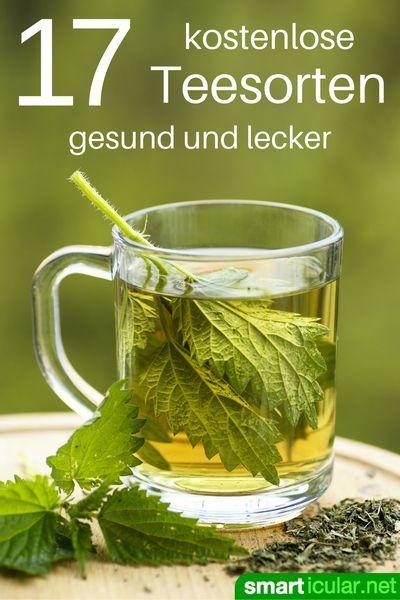 Tee muss nicht teuer sein. Es gibt viele Möglichkeiten kostenlosen, gesunden und schmackhaften Tee selbst herzustellen. Wir zeigen dir die besten Tricks!