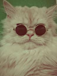 This pimpin' cat knows how to style