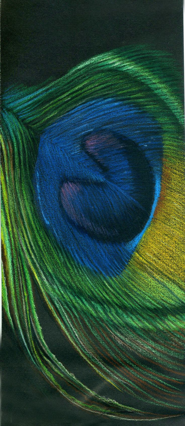 """Peacock Feather"" (Colored pencil on black paper) By Kristee Mays"