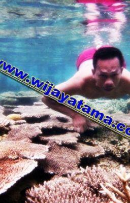 """Read """"Paket Pulau Seribu - PaKet Pulau Seribu"""" #wattpad #adventure"""